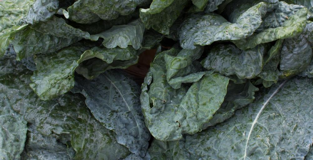 Worden Farm CSA crops-3905