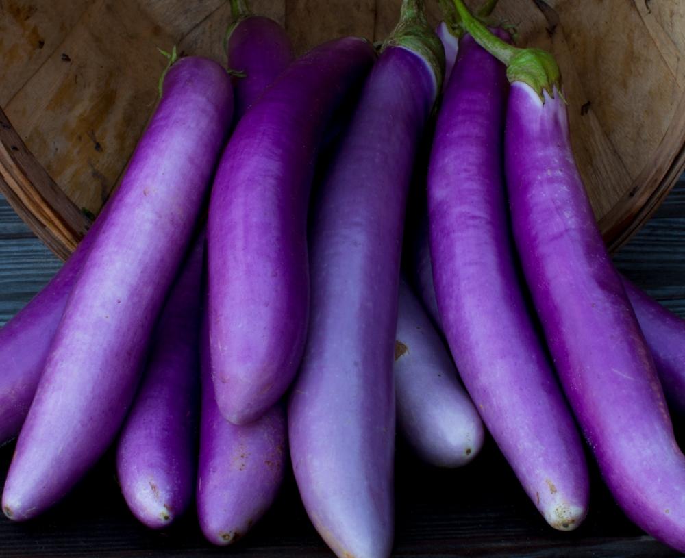 Worden Farm CSA crops-3976