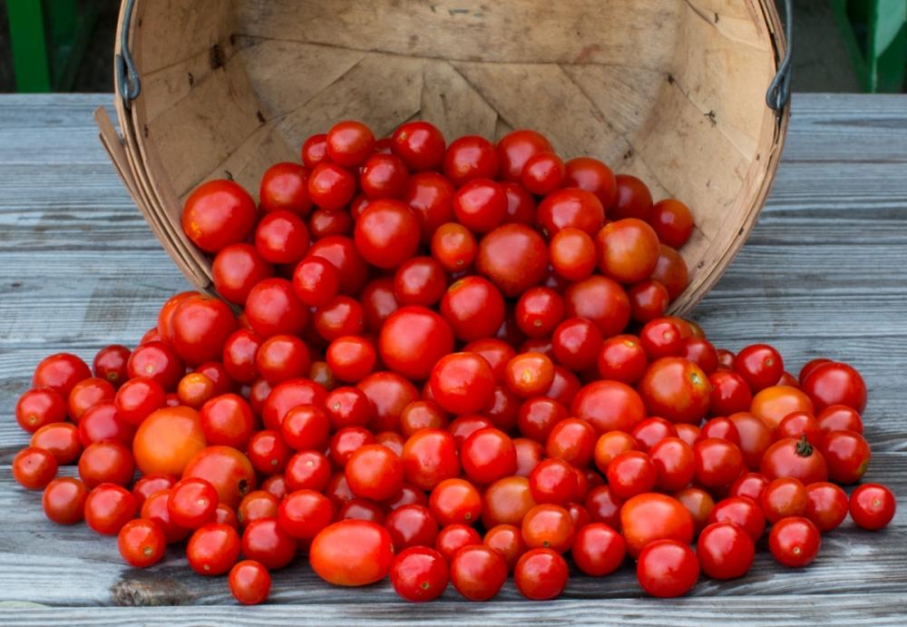 Worden Farm CSA Crops-4228