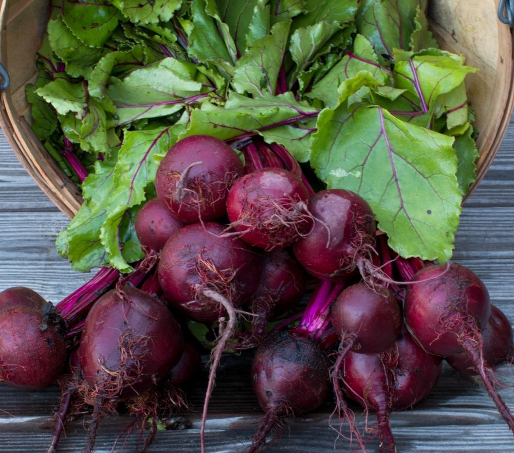 Worden Farm CSA crops-3965
